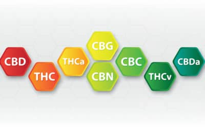 THC CBD CBN and CBG